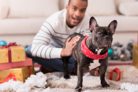 Millennials want their pets to keep up with the latest grooming and fashion trends, with 54% saying they'd go without so they could afford to pamper their pets