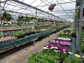 The owner of Ravenshead Plant Centre (pictured) has been jailed after being found guilty of money laundering and conspiracy to produce cannabis at the garden centre