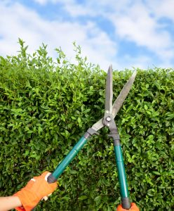 Shear necessity: gardeners have been tackling rampant growth