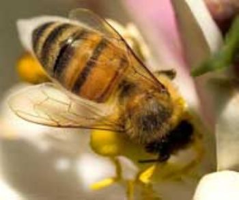 Garden centres join DIY giants in banning 'bee-killing' pesticides