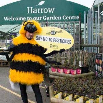 BEE UPDATE: GCG and Dobbies become latest to pull neonicotinoids from shelves