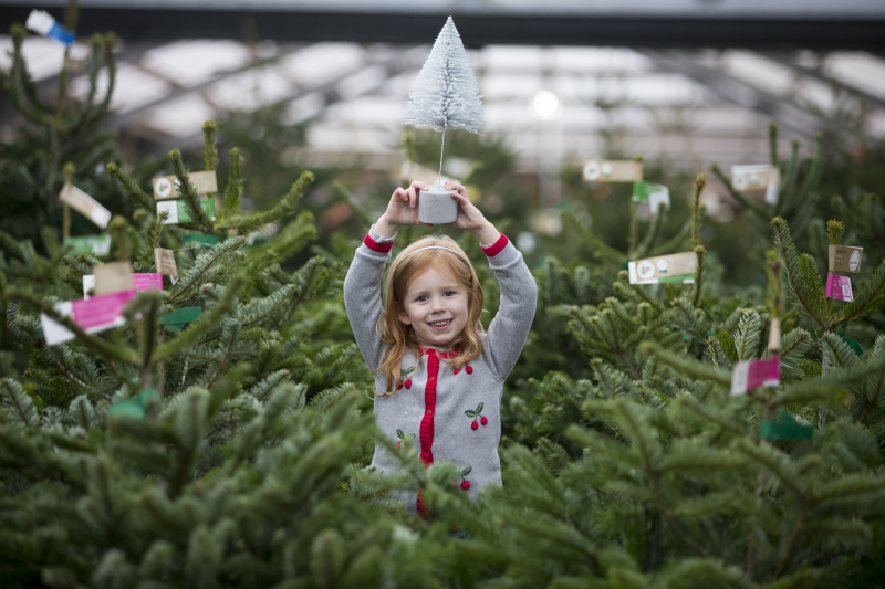 Dobbies reported record sales of real Christmas trees over the festive trading period