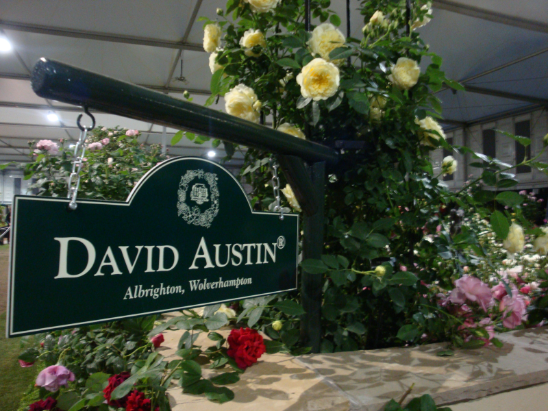 Rose varieties from Chelsea veteran David Austin Roses are also expected to be popular with customers