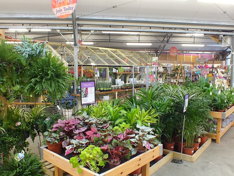 GCA member, Coolings Garden Centre reported a good month across all of its sites, with houseplants a particularly strong category, up 35%